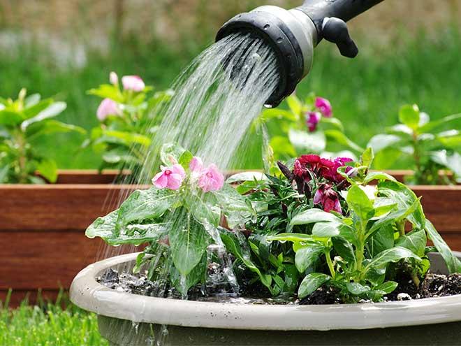 Plantenbakken water geven